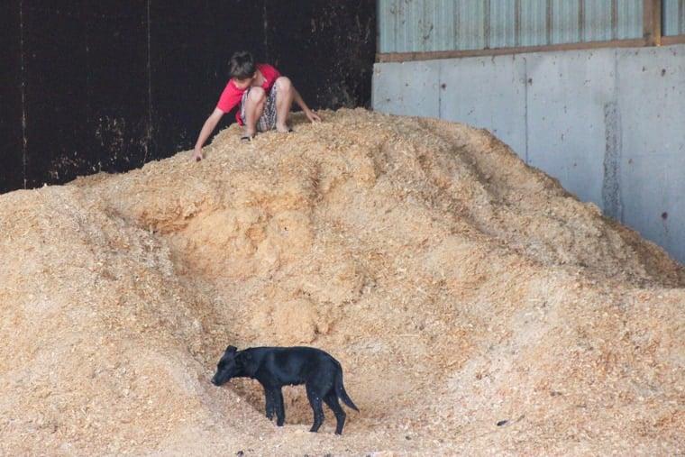 Capadau Organic Pork Farm - Exploring the farm grounds with the kids and dogs.