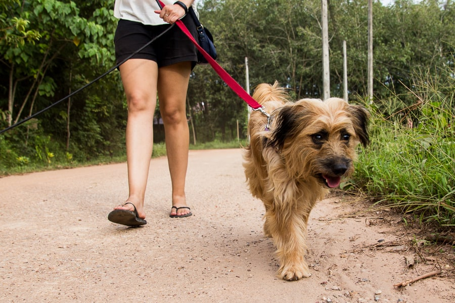 Animal Welfare Lanta Time For Lime - If you have a spare 5 minutes, why not take some lucky puppies for a walk to the beach or through the forest? | wandercooks.com